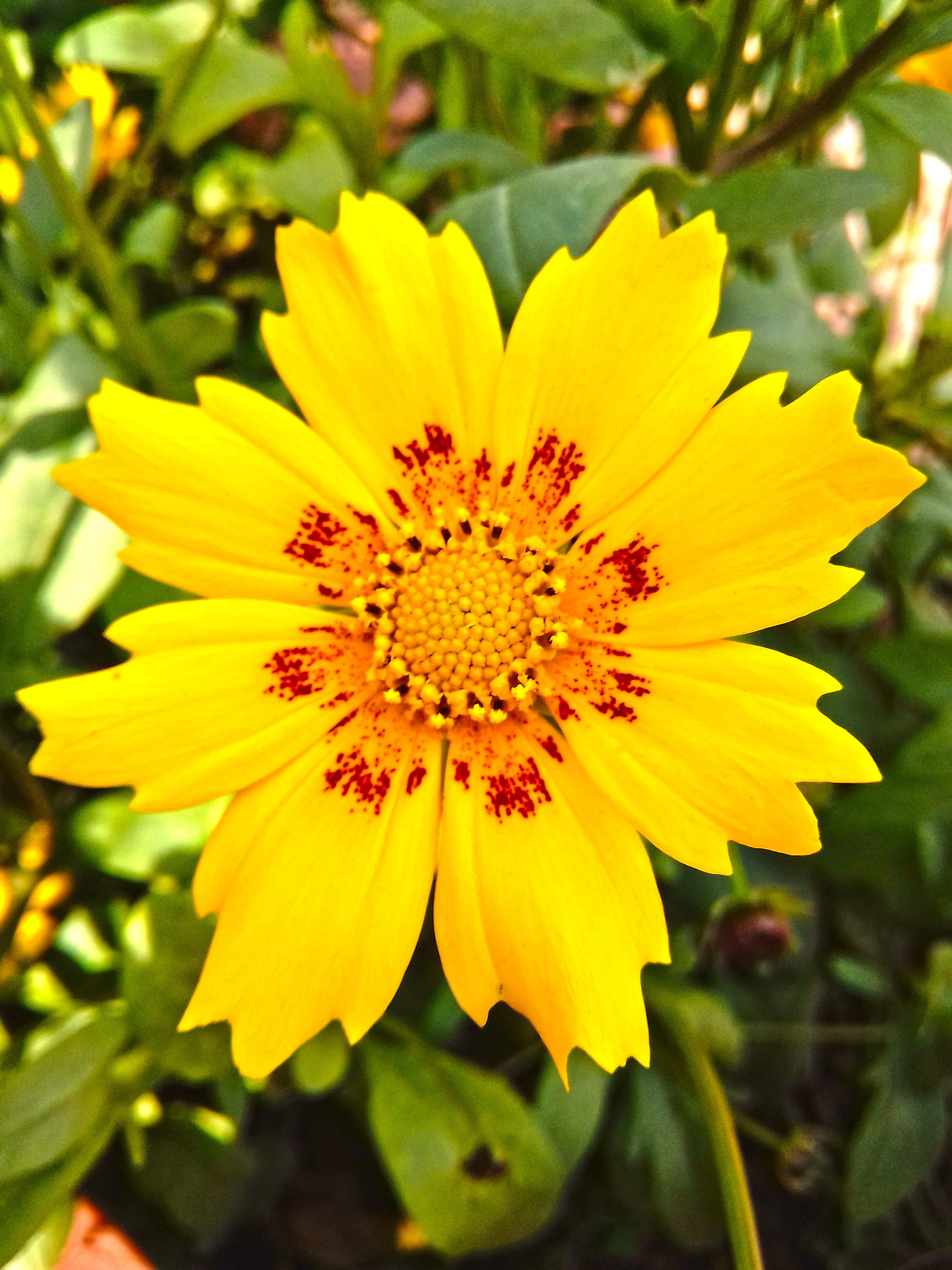 find here Yellow Flower images