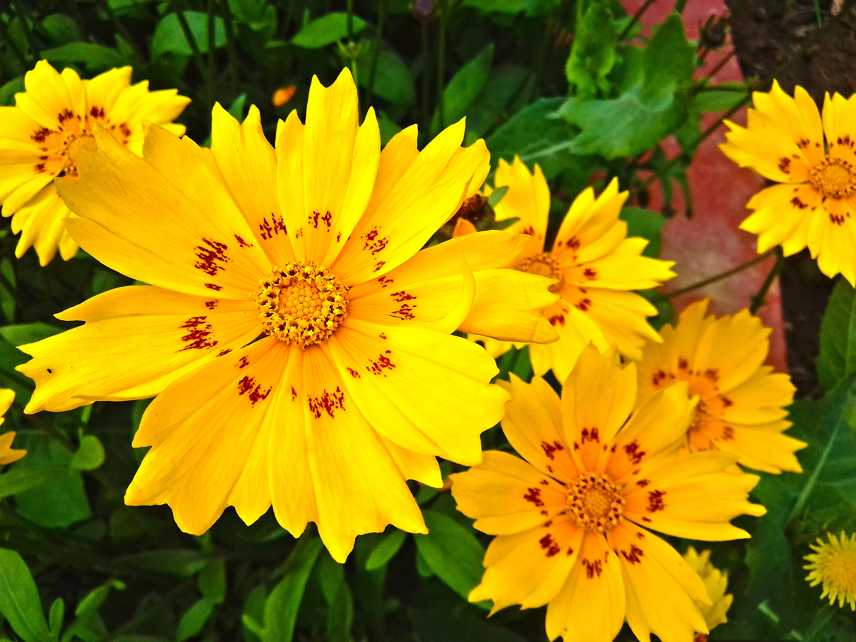 this is the best pretty flower images