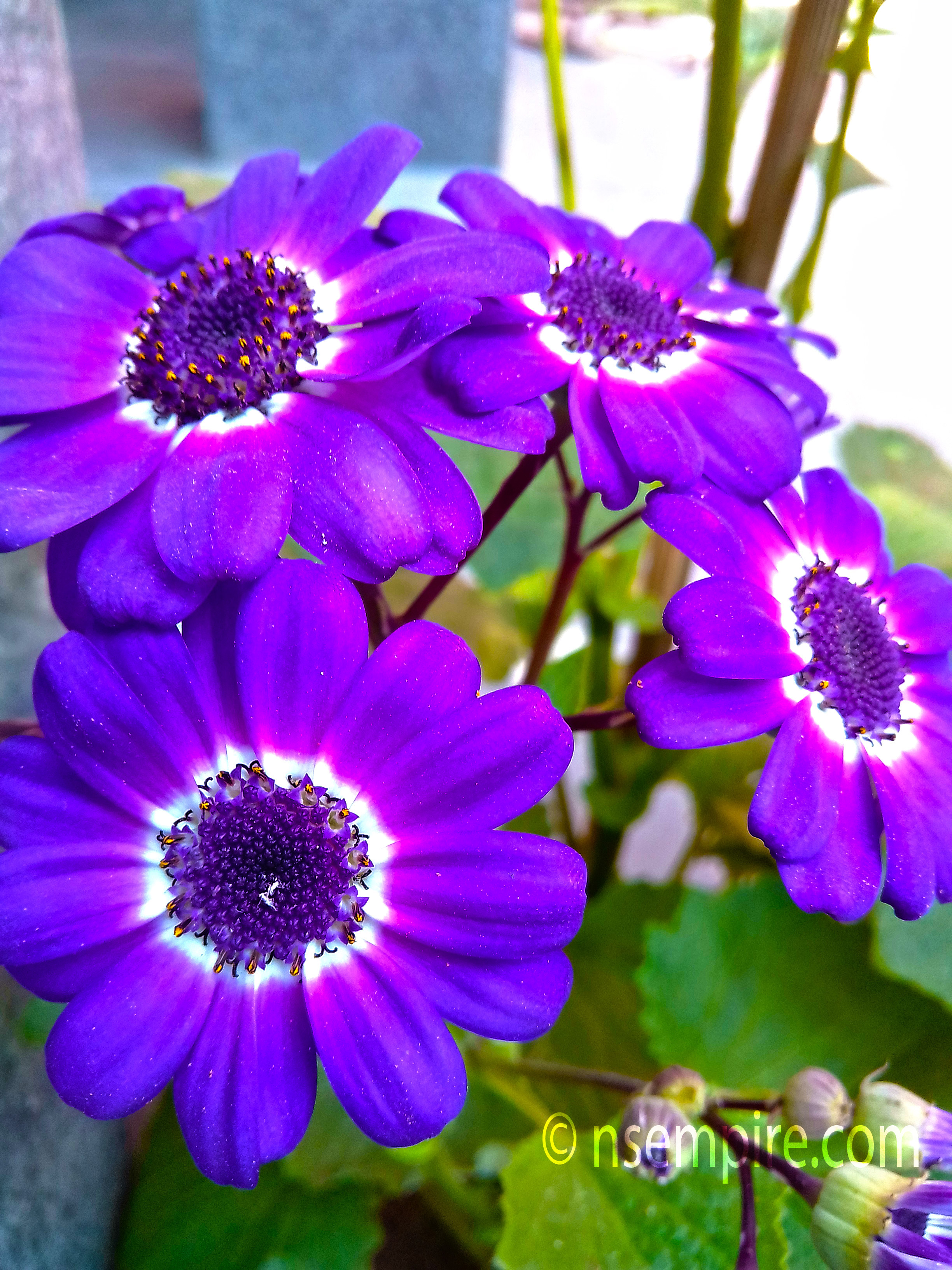 this is beautiful blue flower