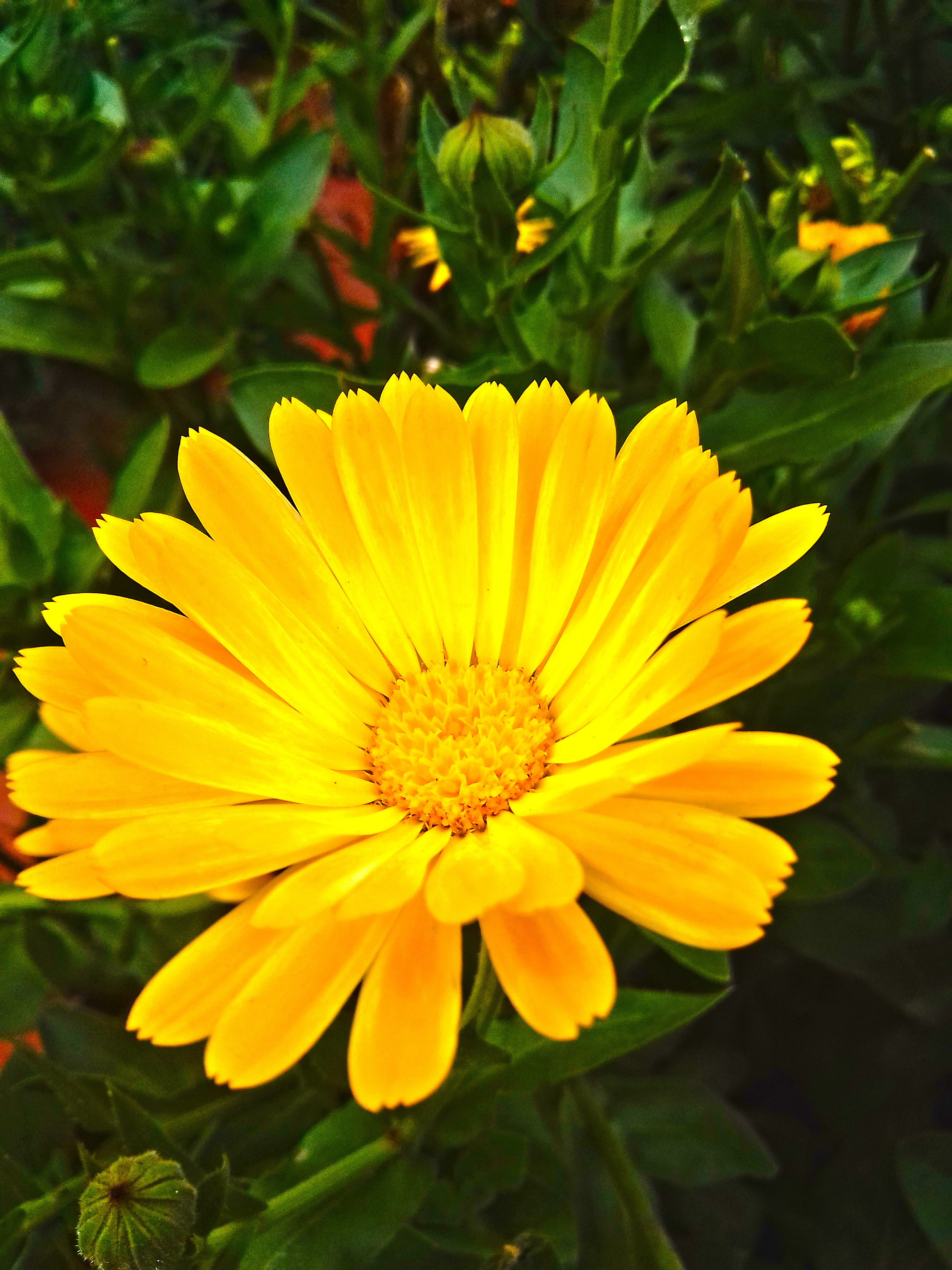 this yellow flower is an impressive flower