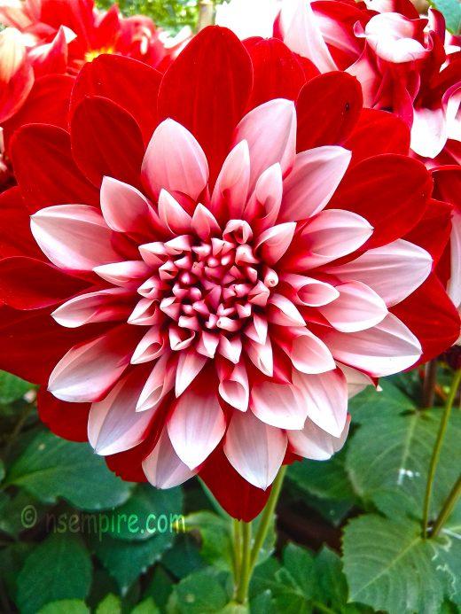 Flower Wallpaper HD