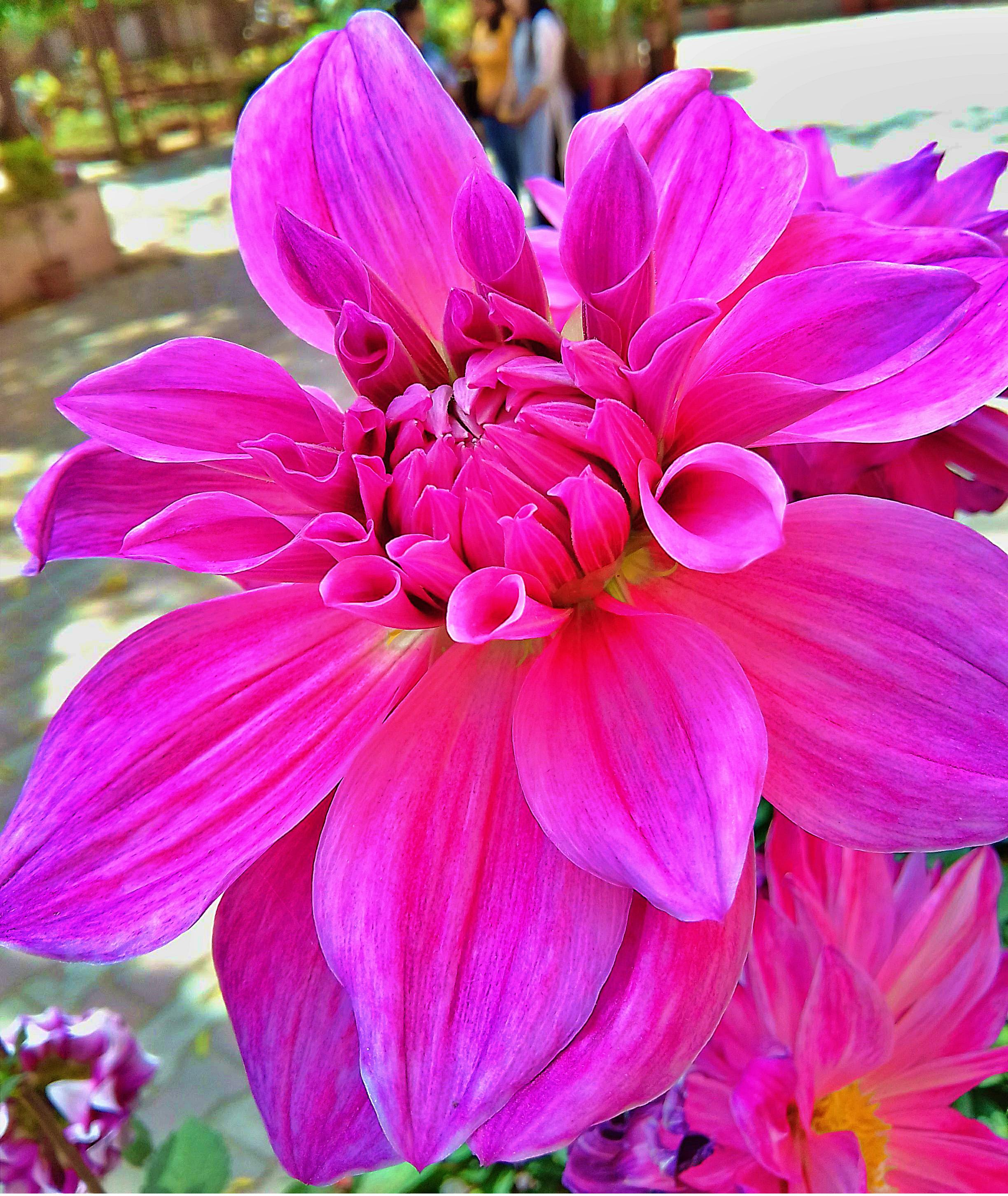 Beautiful flower HD wallpapers