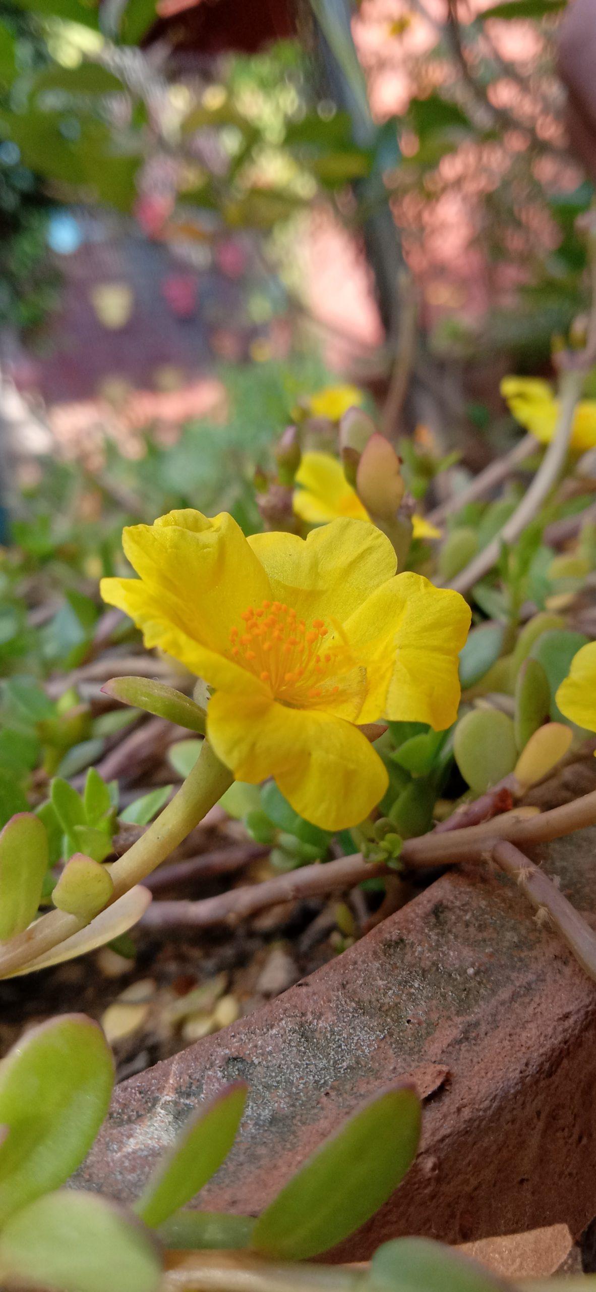 yellow beauty of flower