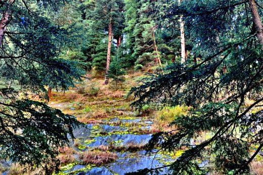 rainforest trees images