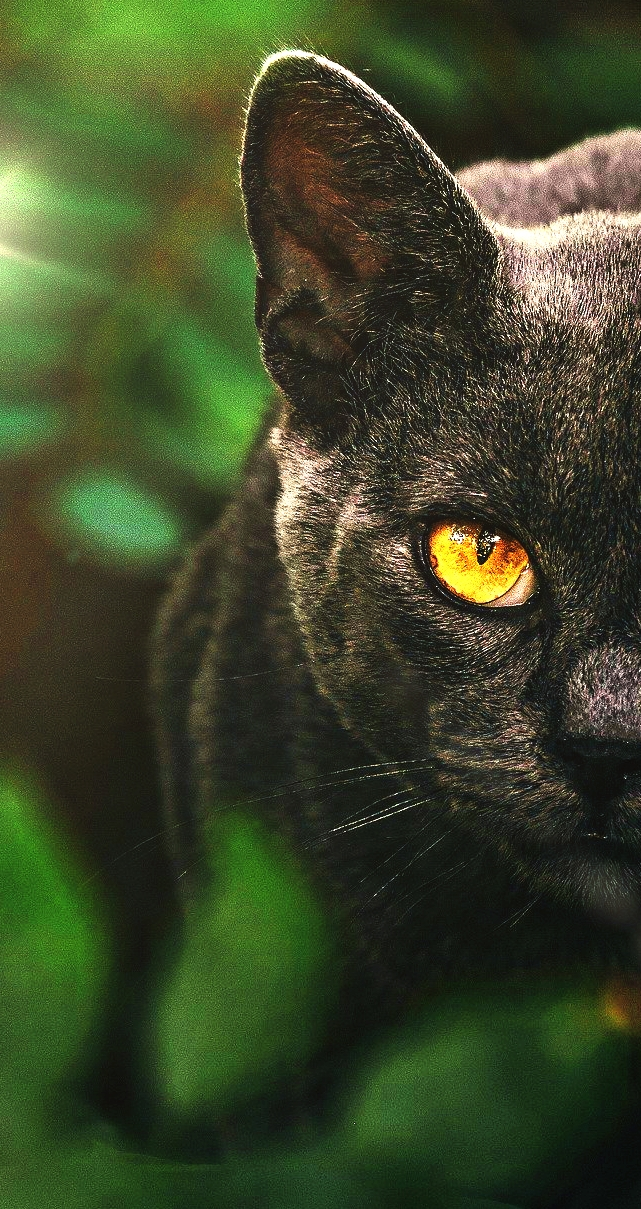 Black Cat 2020 wallpaper from NSempire