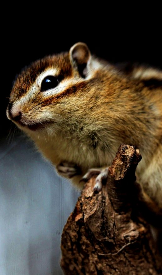 Squirrel is the cutest creature in this world